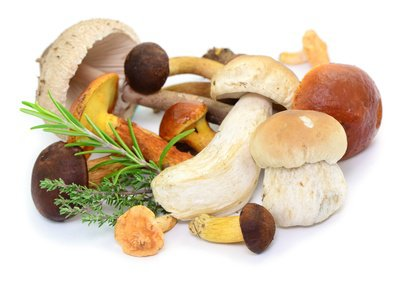 Congeler du champignon - Comment cuisiner les champignons frais ...